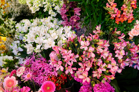 variety of cut fresh flowers on display in shop