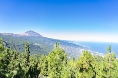volcan Teide with canarian pine forest corona forestal, national park of Tenerife island, Spain