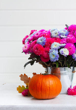 bouquet of pink and blue chrysanthemum fresh flowers close up with ripe of pumpkins on white background