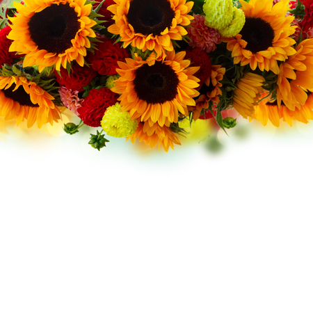 border of dahlia and sunflowers close up over white background