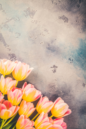 Row of pink and yellow tulips on gray stone background with copy space, toned