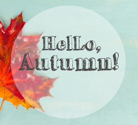 Fall red maple leaves on blue background with hello autumn greetings