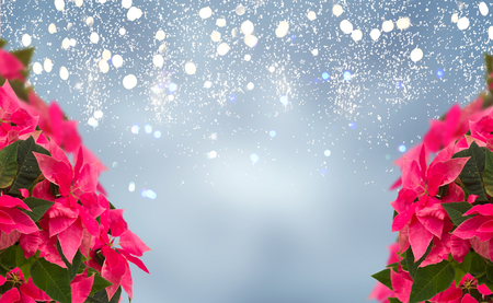 frame of pink poinsettia flower or christmas star on blue bokeh background