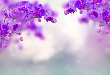 Fiori di orchidea viola con farfalle su grigio sfocato Archivio Fotografico