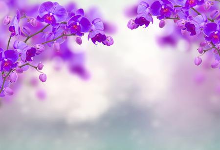 Lila Orchideenblüten mit Schmetterlingen auf defokussiertem Grau Standard-Bild