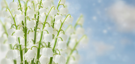 Lily of the valley flowers on blue sky bokeh  banner