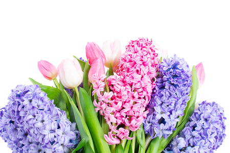 Bunch of hyacinth blue and pink fresh flowers isolated on white background