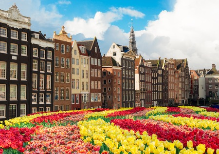 Typical dutch houses over tulips, Amstardam, Netherlands Stockfoto