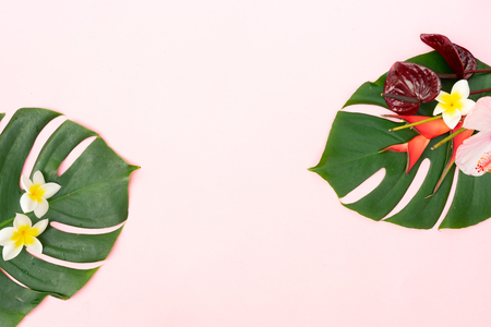 Tropical green fresh monstera leaves and exotic flowers on pink  with copy space, flat lay