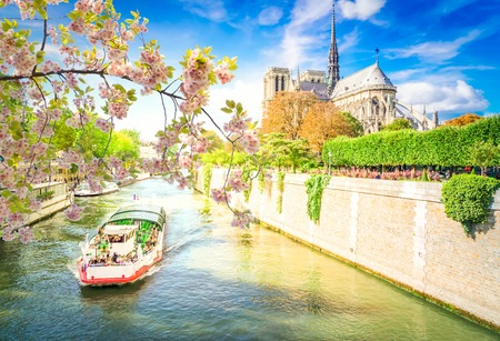 Notre Dame cathedral over the Seine river with boat with spring flowers tree, Paris, France Фото со стока