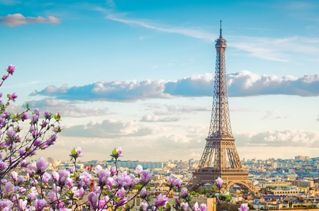 Famous Eiffel Tower and Paris roofs with spring tree, Paris France Stock Photo