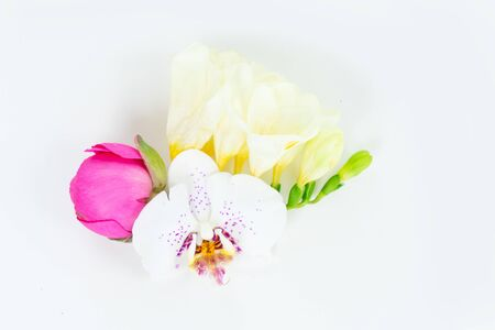 Flowers composition made of orchid and ranunculus bud flowers on white background. Flat lay, top view, copy space
