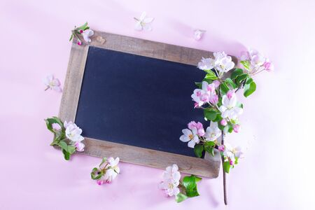 Spring apple tree blooming flowers on pink background, top view flat lay scene with copy space on blank blackbord