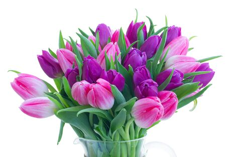 Pink and violet fresh spring tulip flowers bouquet isolated on white background