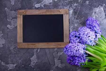 Gardening concept with hyacinth fresh flowers on dark gray background, top view with copy space on blackboard