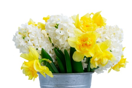 Easter spring flowers isolated on white background