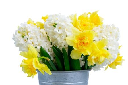 Ostern Frühlingsblumen isoliert auf weißem Hintergrund