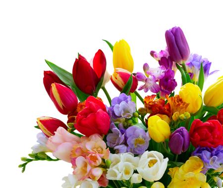 Ramo de tulipanes y fresias cerca aislado sobre fondo blanco.
