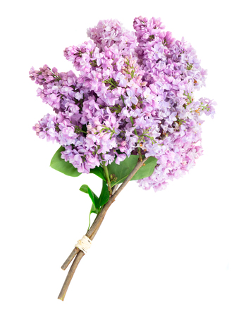 Fresh lilac flowers posy over white background, flat lay top view scene