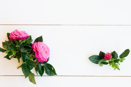 Rose mauve fresh flower with leaves on table from above with copy space, flat lay scene