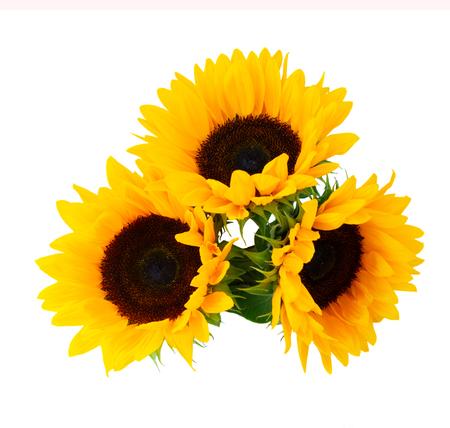 Zonnebloemen verse bloemen drie hoofden geïsoleerd op een witte achtergrond
