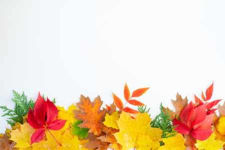 Natural fall leaves border, top view over white background Banco de Imagens