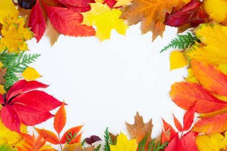 Natural fall leaves frame, top view over white background Stock Photo