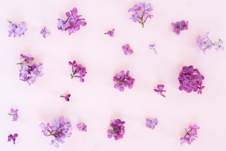 Fresh lilac flowers over pink plain background with copy space, flat lay floral composition