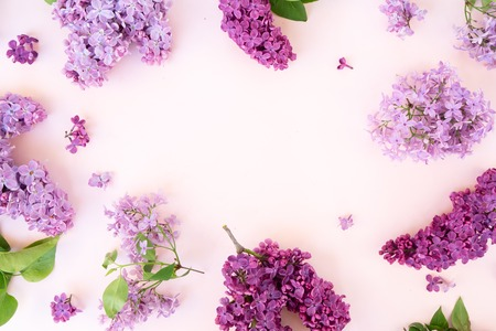 Fresh lilac flowers frame over pink background with copy space, flat lay floral composition 版權商用圖片