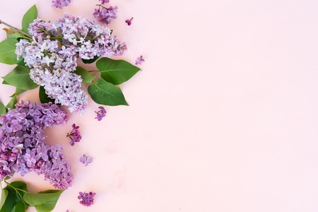 Fresh lilac flowers border over pink background with copy space, flat lay floral composition