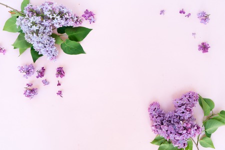 Fresh lilac flowers over pink plain background, frame with copy space, flat lay floral composition
