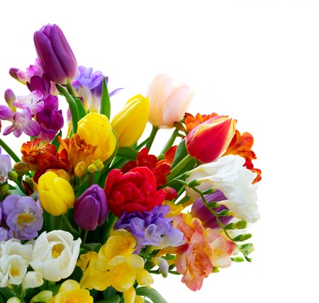 Bouquet of fresh tulips and freesias close up isolated on white background
