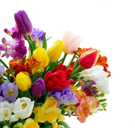 Ramo de tulipanes frescos y fresias cerca aislado sobre fondo blanco.