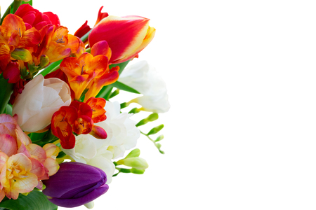 Fresh fowers of tulips and freesias close up isolated on white background