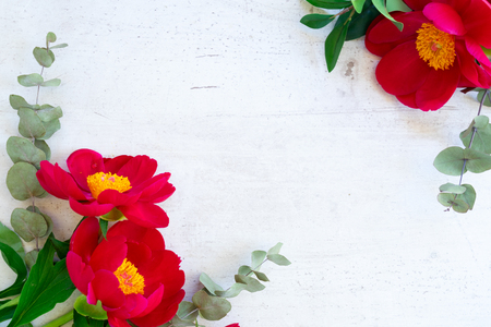 Fresh red peony flowers with green eucaliptus leaves on white wooden background with copy space