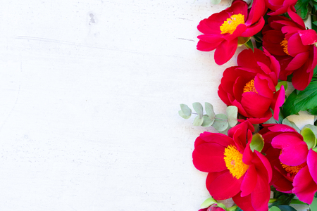 Fresh red peony flowers close up border on white wooden background 版權商用圖片