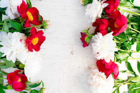 Fresh red and white peony flowers with leaves on white wooden background frame with copy space 版權商用圖片