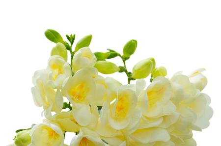 White freeseia fresh flowers border isolated on white background