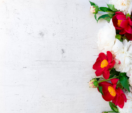 Fresh red and white peony flowers with leaves border on white wooden background