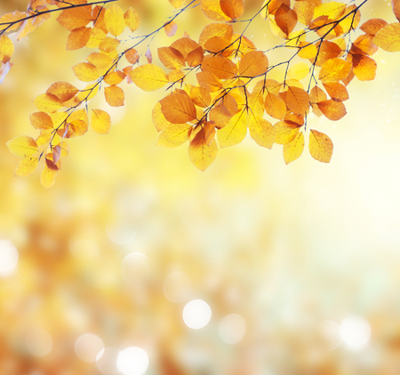 Fresh yellow fall tree foliage on bokeh background with sparkles and sun beams