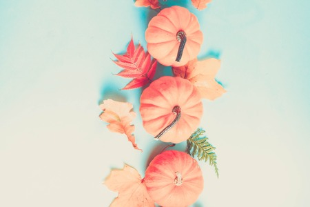 Orange pumpkins and leaves on blue background with copy space, retro toned