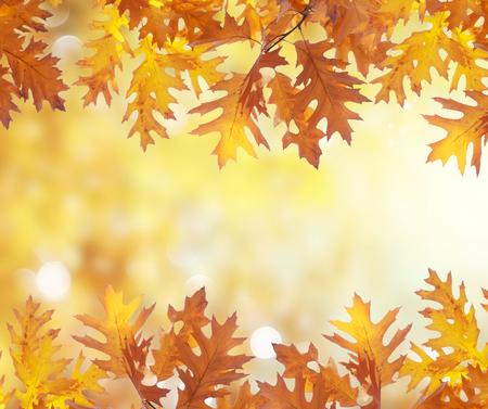 Fresh oak fall tree foliage boders on bright park background