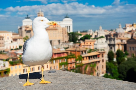 skyline of Rome and white seagull bird, Rome Italy 免版税图像