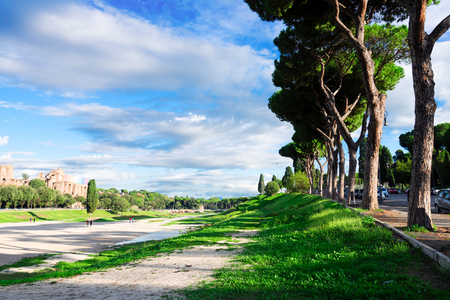 street with pine trees and Circus Maximus - roman famous ruins at sunny summer day in Rome, Italy