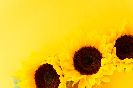 Sunflowers booming flowers border on yellow background with copy space