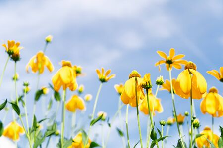 Yellow flowers over blue summer sky
