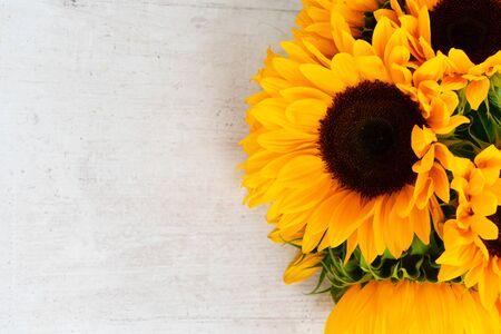 Sunflowers fresh flowersand petals on white wooden table background Imagens