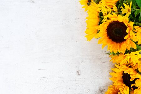 Sunflowers fresh blooming flowers and petals border on white wooden table background with copy space