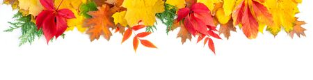 Natural fall leaves border, top view over white background, extra wide banner