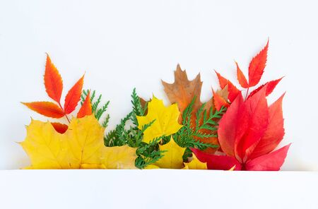 Natural fall leaves border, top view over white background with copy space